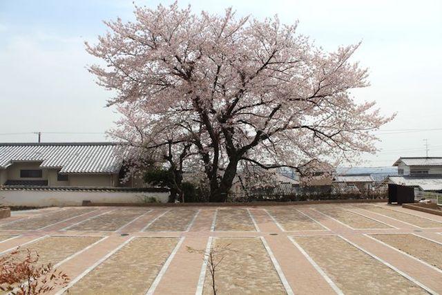 吉祥寺境内墓地桜墓苑02