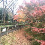 横須賀市営公園墓地01