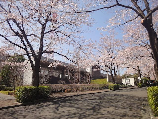 東京多摩霊園−桜と管理棟