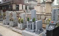 法泉寺春日野墓地05