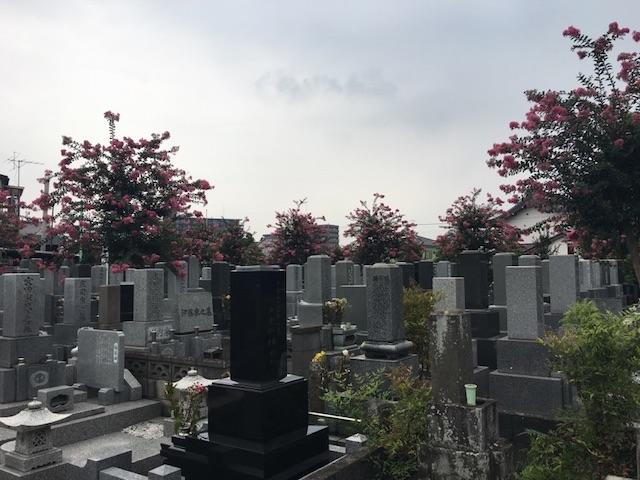 浄光寺墓地−霊園全体2