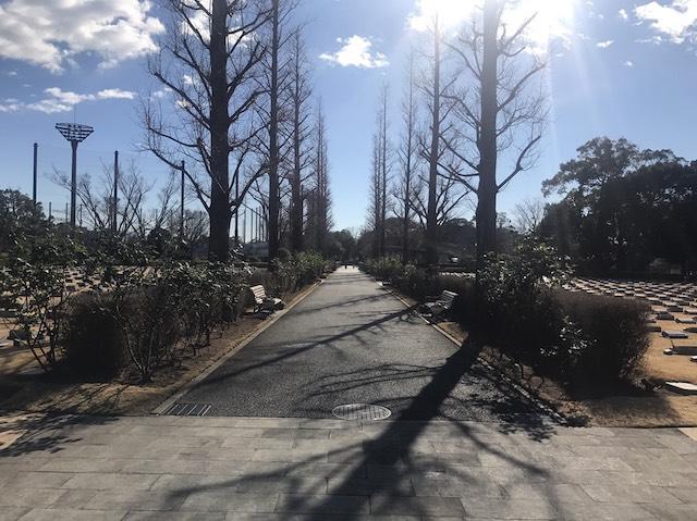 横浜市営メモリアルグリーン霊園内並木
