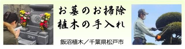 千葉県松戸市のお墓のお掃除、植木の手入れ、飯沼植木_09