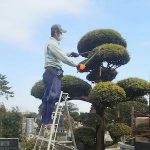 千葉県松戸市のお墓のお掃除、植木の手入れ、飯沼植木_07