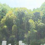 今治市 大谷墓地