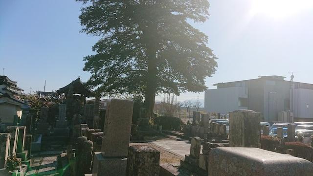 善福寺墓地−霊園全体写真