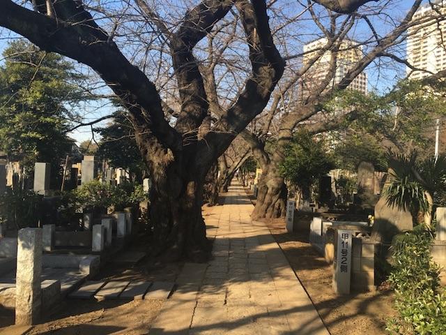 谷中霊園07