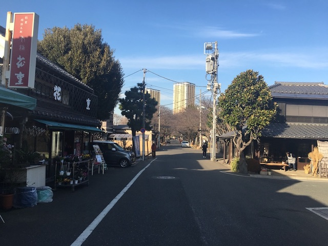 谷中霊園02