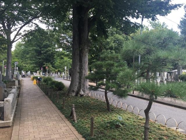 都立雑司ヶ谷霊園05